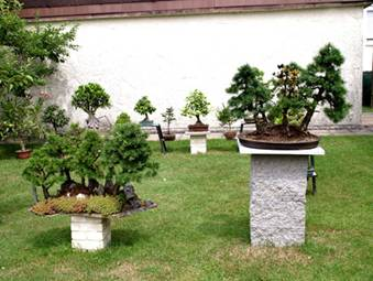 mein bonsai garten. Black Bedroom Furniture Sets. Home Design Ideas